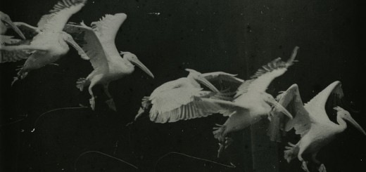 A photo of flying pelican taken by Étienne-Jules Marey. circa 1882. Source : https://johnedwardcochran.wordpress.com/2010/12/20/change-of-seasons-in-compressed-time/ via http://muhka.be/.     CC-PD-Mark Author died more than 100 years ago public domain images
